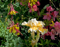 Iris, Rhododendron, and Columbines