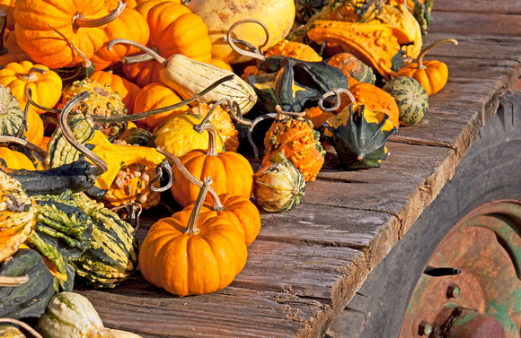 Gourds on Flatbed